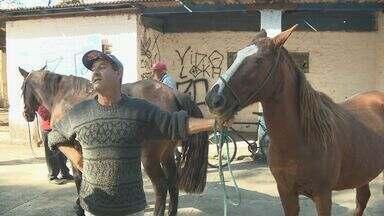 Cavalos de charretes turísticas terão chips com identificação em Poços de Caldas (MG) - Cavalos de charretes turísticas terão chips com identificação em Poços de Caldas (MG)