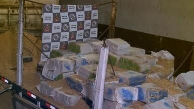Polícia apreende três toneladas de maconha em São Paulo - A droga estava escondida em uma carreta e em um caminhão. Os traficantes foram surpreendidos quando descarregavam a droga, que estava escondida em uma carga de grãos de soja.