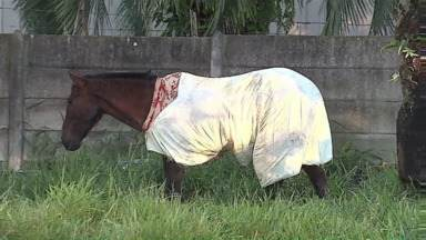 Na primeira geada de 2015, até cavalo tenta fugir do frio em Ponta Grossa - Temperatura mínima chegou a 1°C, segundo o Simepar