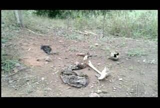 Ossada humana, roupas íntimas e cabelos são encontrados em fazenda de Campos, no RJ - Ossos estavam à margem da estrada de Tabatinga, em Campos, no RJ.