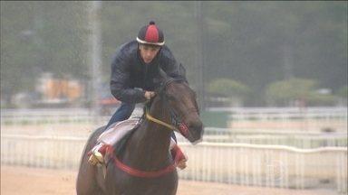 Saiba como é o treino dos cavalos para o Grande Prêmio Brasil de Turfe - Animais têm rotina de atletas e alimentação controlada.