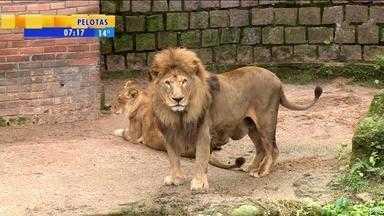 Zoológico de Sapucaia do Sul pode ser privatizado - Atualmente, local é administrado pelo governo do estado.