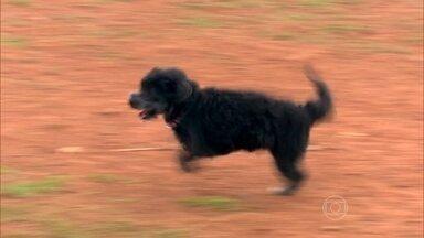 Cupcake tem apenas duas patas e tem vida normal - Dona do cachorrinho explica que ele não precisa ser perfeito para ser feliz