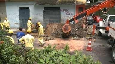 Chuva forte derruba três árvores no Recife - Ninguém se feriu e o trânsito ficou interrompido nos locais das quedas das árvores.