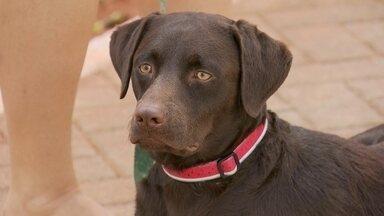 Moradores de Águas Claras acham que animais estão sendo contaminados por veneno de capina - No sudoeste, exames confirmaram o envenenamento de um cachorro pelo veneno usado na capina de uma praça.