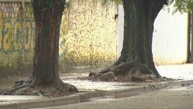 Em Cascavel, pelo menos dez árvores são envenenadas por ano - Prática é crime e quem for pego fazendo paga multa de setecentos reais