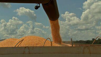 Venda das safras 14/15 de soja e milho avança em MT - Adesão ao CAR aumenta, exportações mato-grossenses de soja caem e comercialização de soja e milho avança. MT Rural mostra outros assuntos de destaques para o campo.