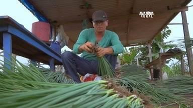 Produção de hortaliças beneficia famílias de Iranduba, no AM - O plantio é feito em regime de parceria entre trabalhadores que se unem para cultivar nos 1200 m² de terra.