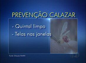 Confira medidas preventivas contra o calazar - Confira medidas preventivas contra o calazar