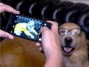 Veja cães e gatos que ganharam fama na internet - Animais tem perfis em redes sociais.