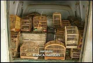 Capivara, 43 pássaros silvestres e uma espingarda são apreendidos em Campos, no RJ - Animais estavam em duas casas.