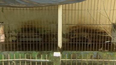 Parque Zoobotânico vai construir um novo cativeiro para abrigar onças - O Parque Zoobotânico de Macapá vai construir um novo cativeiro para abrigar as onças. É o início de um projeto de reforma. O parque está fechado para visitação há quinze anos.