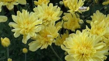 Produtores do Amazonas apostam em cultivo de flores - Primeiro cultivo de flores do estado, tem cerca de dez variedades.