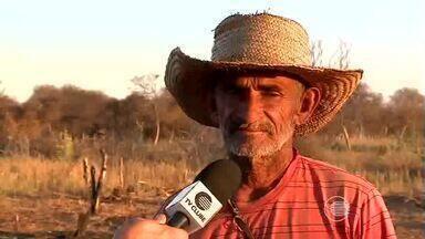 Agricultores sofrem com falta de água, enquanto seca devasta plantações de milho e feijão - Agricultores sofrem com falta de água, enquanto seca devasta plantações de milho e feijão