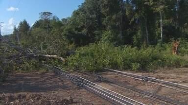 Queda de árvore sobre a rede elétrica deixa Santana sem energia por 20 horas - A queda de uma árvore sobre a rede elétrica, depois da chuva de sábado à noite, tirou o sossego do fim de semana dos moradores de Santana. A falta de energia persistiu por mais de vinte horas.