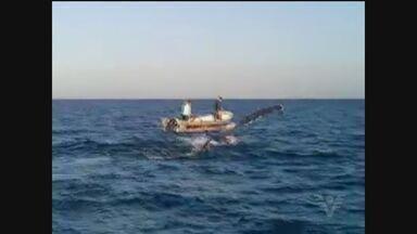 Pescadores de Mongaguá resgataram uma baleia que estava enroscado em uma rede no mar - Grupo ainda registrou o feito durante o salvamento do animal.