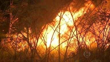 Brasil já tem mais de 13 mil focos de queimada por causa do tempo seco - Com o tempo seco em grande parte do país, as queimadas se alastram. Já são mais de 13 mil focos. Só na região do Cerrado, na sexta-feira (14) foram mais de 600.