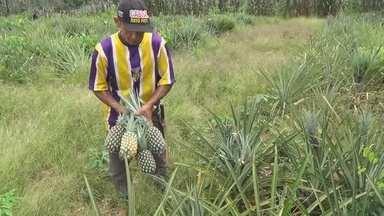 Agricultura familiar em Santo Antônio do Matupi gera empregos para pequenos produtores - Veja mais detalhes na reportagem da Rede Amazônica.