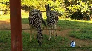 Passeio no zoológico é boa opção durante o feriado, em Salvador - São 1600 animais em um percurso de 3 km. Veja as dicas para fazer uma boa visita.