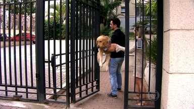 Bichos de estimação são impedidos de circular em condomínio da Zona Leste da capital - Os donos do goldem retriever, de três anos e com 43 quilos, precisam carregar o cachorro no colo. Uma das regras do condomínio na Vila Formosa proíbe a circulação de animais.