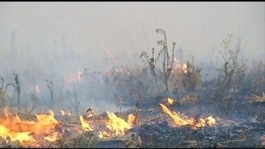 Mais de 1,6 mil incêndios foram registrados em GO em agosto - Fogo se aproxima de tanques de uma usina em Jandaia, no sudoeste de Goiás, que armazenam 60 milhões de litros de álcool. Ministério Público Federal começa a investigar as causas do incêndio.
