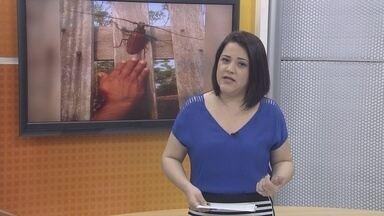 Veja os destaques do G1 de Rondônia desta quarta-feira (16) - Veja as principais notícias desta tarde, com ana Fabre.