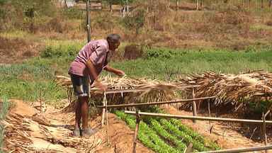 Mirante Rural mostra desafio de produtores para enfrentar estiagem no Maranhão - No oeste do Maranhão, criadores alugam pasto para alimentar rebanho. Mato seco e alta temperatura aumentam incidência de queimadas.