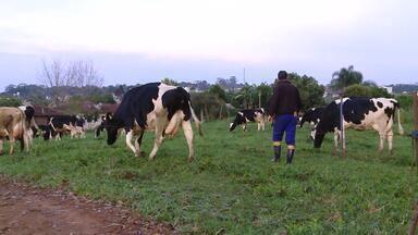 Vale do Taquari é o terceiro maior produtor de leite do RS - Município pretende expandir ainda mais a produção leiteira.
