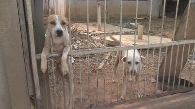 Dois cachorros estão há 6 meses trancados em quintal de casa - Animais foram abandonados em construção de residência de Ariquemes.Vizinhos se sensibilizaram com situação e alimentam bichos pela grade.