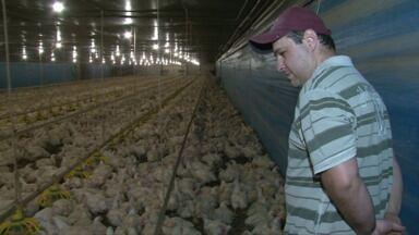Assista ao 1º bloco do Caminhos do Campo do dia 27 de setembro de 2015 - Paraná lidera exportações de frango no Brasil
