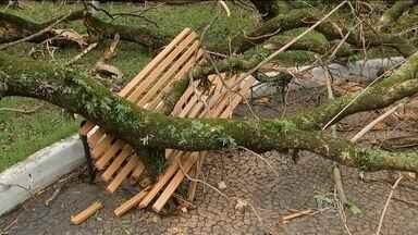 Temporais deixam milhares de pessoas sem luz no litoral de SP - Vento derrubou dezenas de árvores em São José do Rio Preto. Em Salto, foram mais de 200, e a maioria com a raiz. O Centro de Gerenciamento de Emergências registrou ventos de até 81 km/h na cidade de São Paulo.