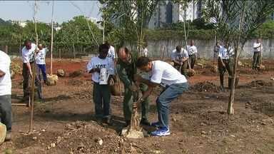 Militares participam de mutirão do Verdejando na Zona Norte da capital - Os voluntários irão plantar árvores típicas da Mata Atlântica em uma área árida e onde circulam muitos carros em Santana.