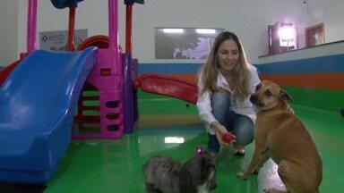 Veterinária inova e abre creche para cães em Maringá - Inovação é a chave para driblar a crise