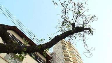 Poda de árvores é criticada por moradores em Vitória, ES - A Prefeitura diz que as podas são necessárias para afastar as plantas dos fios elétricos e garantir a segurança da população.