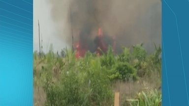 Novos focos de incêndio voltam a destruir plantações em Caapiranga - Fogo destruiu casas de farinhas e implementos agrícolas de produtores rurais.