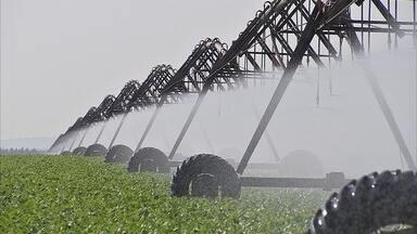 Encontro de agricultores discute o uso da irrigação em tempos de crise hídrica - Para uma plantação dar o resultado esperado vários fatores são necessários: plantio no tempo certo, clima adequado e água na medida. Os agricultores sabem que não podem contar apenas com a sorte, por isso, investem em irrigação.