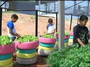 Crianças de escola municipal cultivam horta orgânica usando material reciclado - Crianças de escola municipal cultivam horta orgânica usando material reciclado