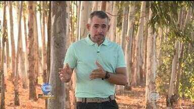 Confira os destaques do programa Clube Rural deste domingo (11) - Confira os destaques do programa Clube Rural deste domingo (11)