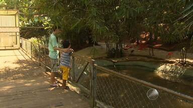 Jardim zoológico tem programação especial para o Dia das Crianças - Um dos espaços mais procurados é o aviário.