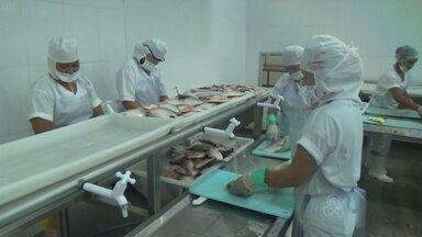 Em Manacapuru, no AM, vazante tem beneficiado região - Município está com fartura de peixes e tem gerado empregos temporários.