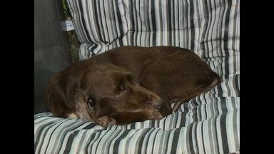 Cachorro que foi queimado vivo volta para casa depois de dois meses de tratamento - Bud segue recebendo acompanhamento, mas está bem.