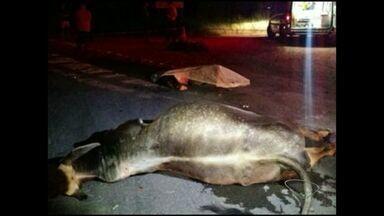 Motociclista morre em acidente na rodovia ES-487, em Itapemirim, Sul do ES - Homem bateu em uma vaca ao fazer uma curva.