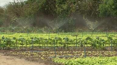 Produtores de Vitória da Conquista investem em sistema de irrigação por causa da estiagem - O plantio de hortaliças é bastante sensível e está recebendo um tratamento especial para não ser perdido por conta da seca.