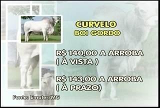 Veja como está a cotação do boi - Em Curvelo, a arroba do boi sai a R$ 140 à vista e R$ 143 a prazo.