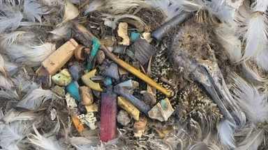 Ilha no Oceano Pacífico é retrato de como lixo plástico mata a natureza - Aves da região estão morrendo ao ingerir conteúdo descartado pelo homem. Consequências também são terríveis para a vida marinha.