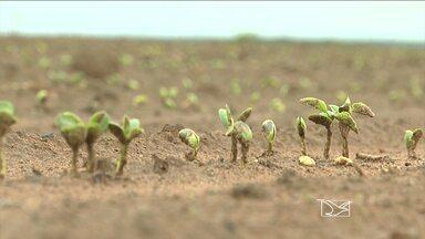 Falta de chuvas atrasa plantio da nova safra de soja em Balsas, MA - No sul do Maranhão, a falta de chuvas atrasou o início do plantio da nova safra de soja. Ainda tem agricultor esperando a chuva pra começar a plantar. Apesar de ter começado a chover, a região sofre com pequenos períodos de estiagem conhecidos como 'veranicos' são os efeitos do fenômeno 'El Niño', que devem chegar com mais força nos próximos meses.