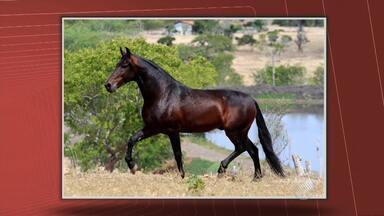Fenangro continua suspensa após morte de cavalo que valia R$ 250 mil - O animal, um Mangalarga Machador, morreu ao receber uma descarga elétrica. A feira acontecia no parque de Exposições de Salvador, que ficou fechado até a noite de segunda-feira (30).