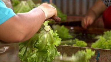 Chuva histórica de novembro causa prejuízos no campo - Produtores perderam produtos por causa do excesso de água. Até o cultivo de uva está comprometido.