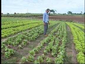 Chuvas prejudicam produção de hortaliças na região - Novembro foi o mês mais chuvoso em Presidente Prudente.