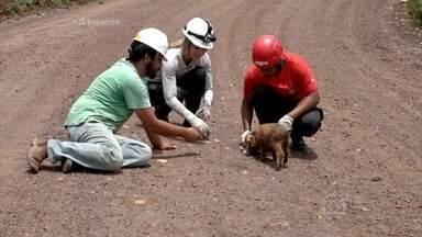 Voluntários atuam em Mariana para tentar resgatar o maior número possível de animais - Yasmin Brunet participa de um grupo de apoio aos animais e diz que ganhou fé na humanidade ao ver o grande número de voluntários na causa